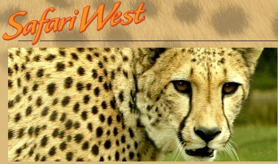safari west  coupons,safari west reviews,safari west death,safari west santa rosa,safari west discount,safari west santa rosa coupons,safari west discount coupons,safari west promo code,