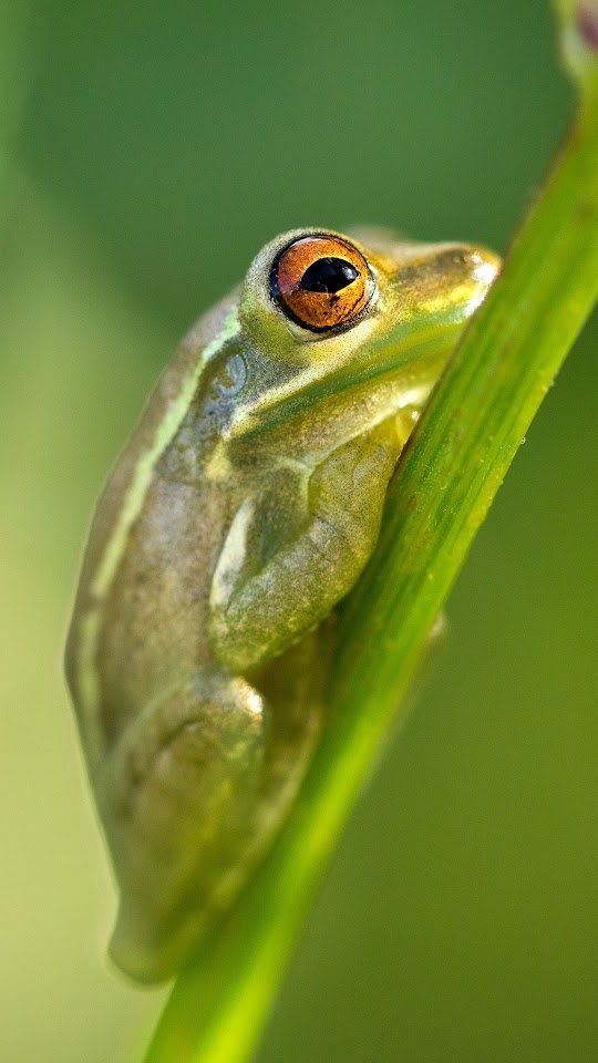 Frog Sitting At Branch Galaxy Note HD Wallpaper