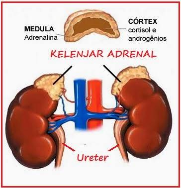 Obat Herbal Kanker Adrenal Paling Ampuh