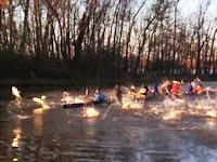 Aneh, Ratusan Ikan Mas 'Serang' Orang-orang di Perahu