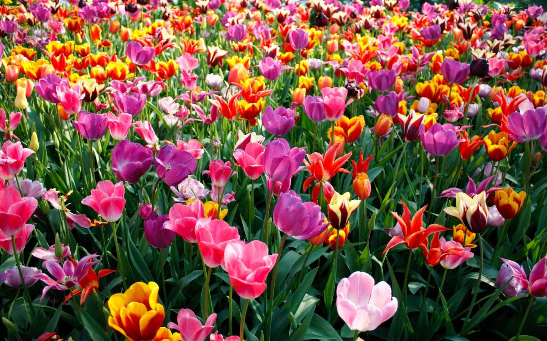 Do Nosso Jeito Que venha a Primavera
