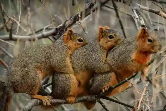 See this cute photo of three squirrels cuddling