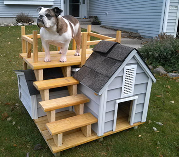cusca caine bulldog englez custi haioase poze caini draguti catei cute dogs pictures dogs houses design fun dog houses