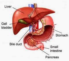 Cara Menyembuhkan Penyakit Liver Kronis