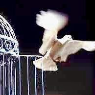 Paloma de la libertad