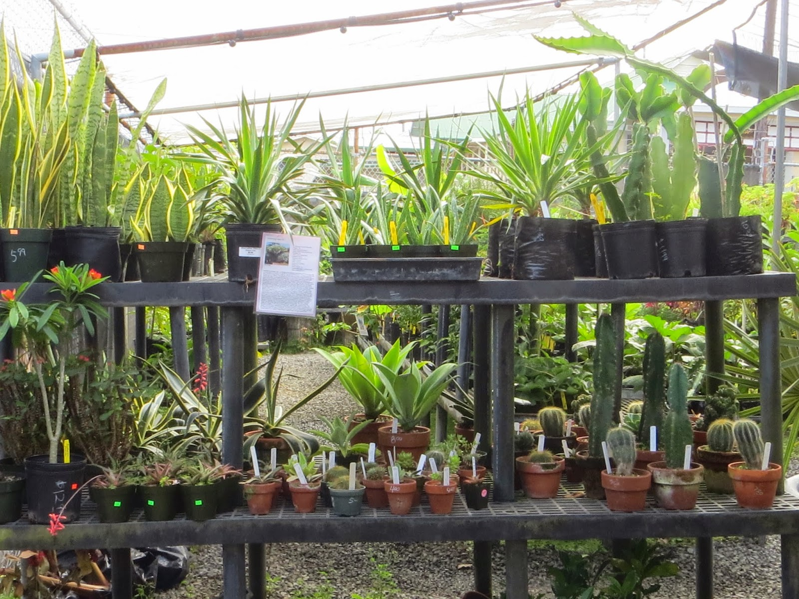 A Quick Visit To Hilo Garden That My Delight Featured Small Nursery I Ll Be Back In 5 Minutes Was Realistically Half Hour