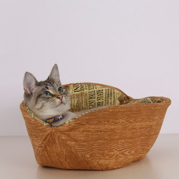 Cat Canoe | Exclusively Cats Veterinary Hospital, Waterford, MI