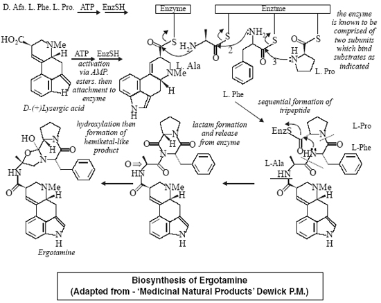 Biosynthesis of Ergotamine (Adapted from - 'Medicinal Natural Products' Dewick P.M.)