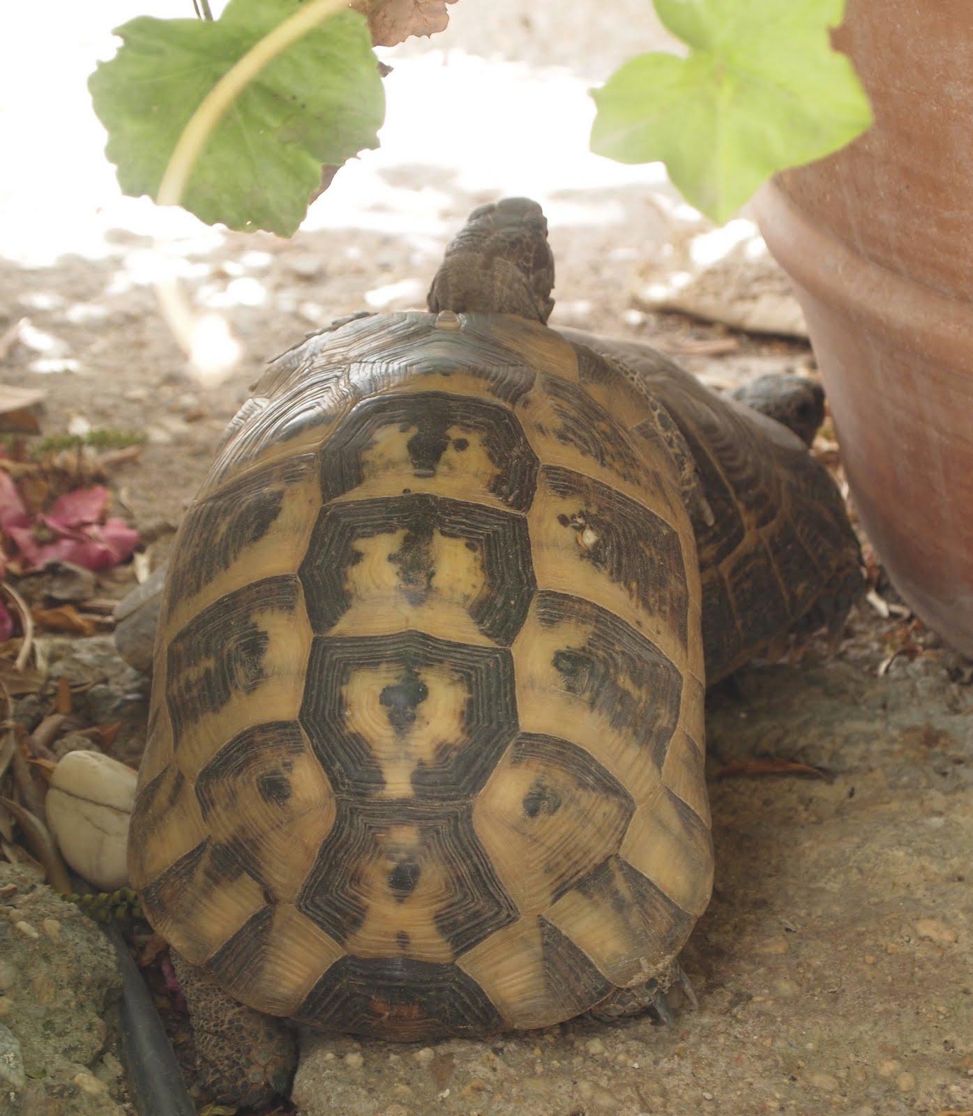 http://2.bp.blogspot.com/-EW88iMbdup0/TlwFdvfHEmI/AAAAAAAABbA/sMZxOwN1vG8/s1600/Tortoise+doing+the+naughty.jpg