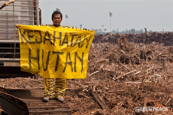 WALHI : Saatnya Bersih-bersih Parlemen dari Para Perusak Lingkungan