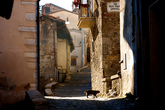 Cat from Tagliacozzo