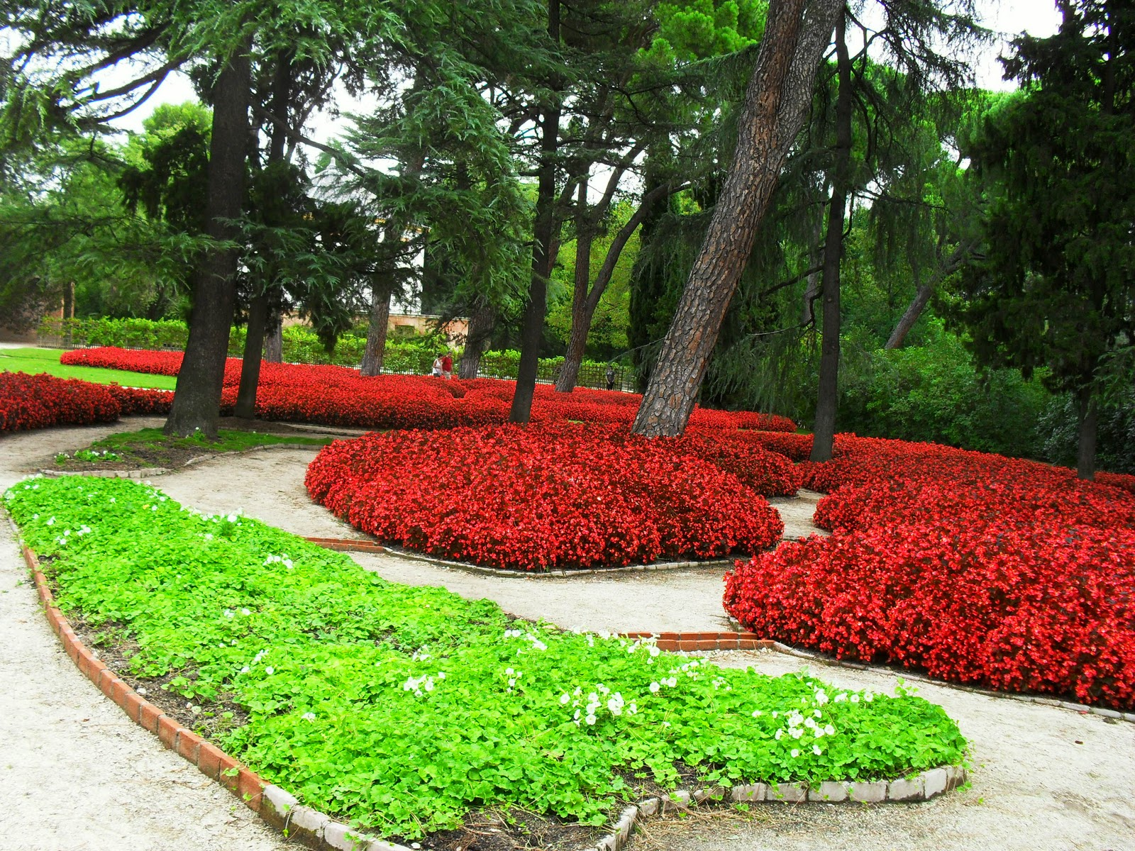 Arte y jardiner a plantas tapizantes o cubresuelos for Plantas modernas para jardin