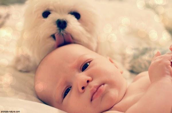 Belle Photo Bébé avec Chien