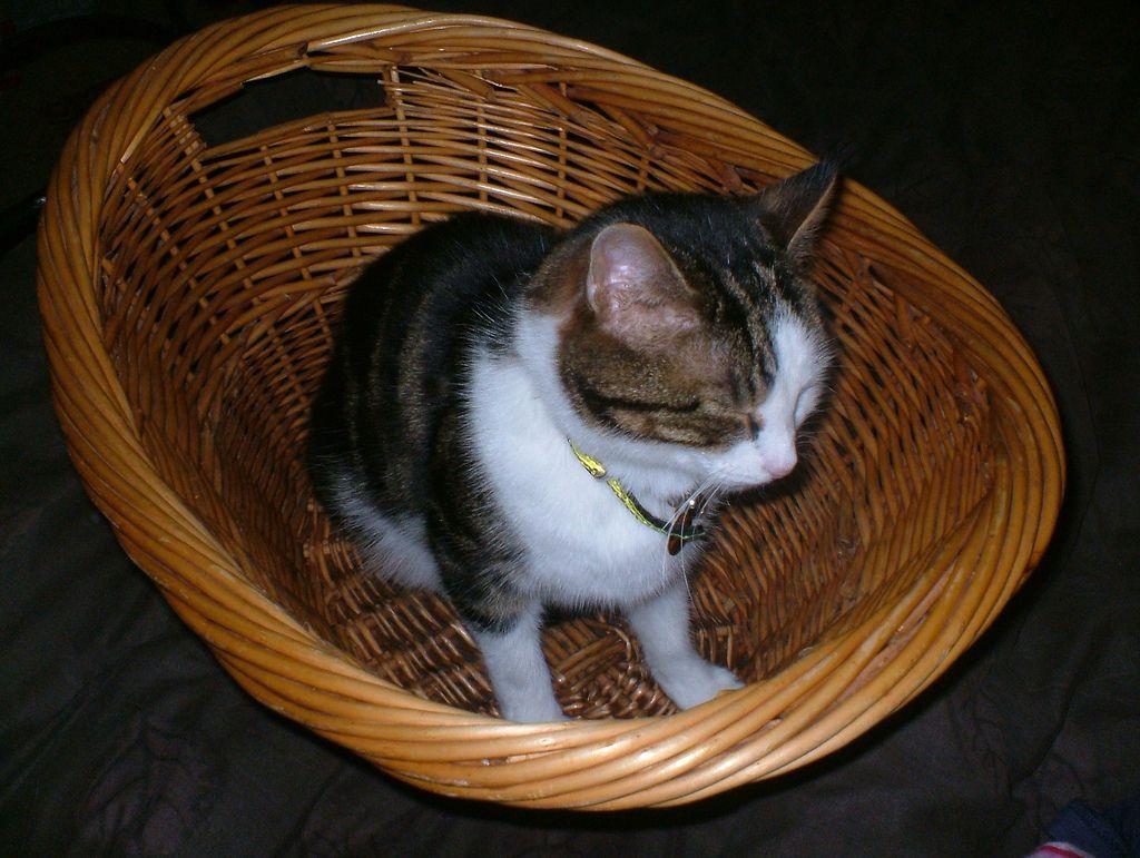 24. cat in a basket  by musicmonkey76