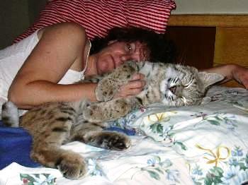 bobcat_nap.JPG
