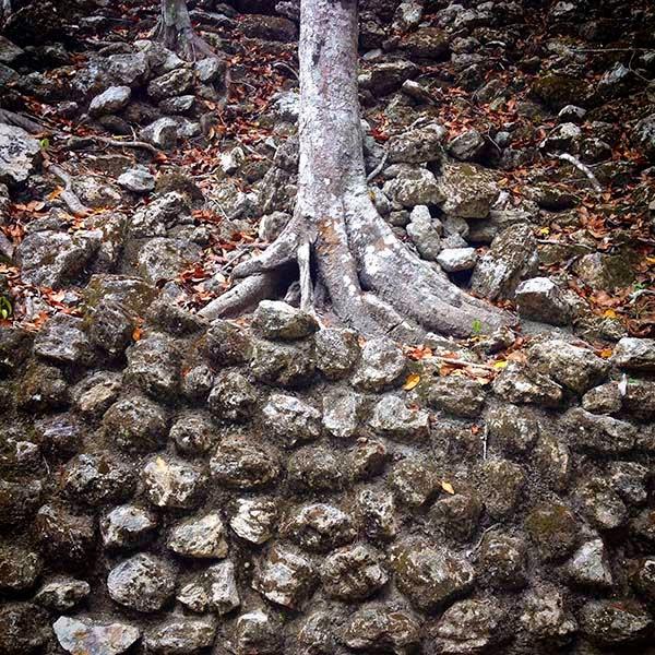 Al pié de la pirámide encontramos un muro  sobre el que crecen las raices de un árbol.  La imagen muestra una lucha entre dos  fuerzas: las de la vida y la muerte. Por un  lado está la naturaleza muerta, construida  por el hombre usando el miedo y la vanidadEn el otro lado están las fuerzas de la vida  y de la naturaleza que siempre crece.