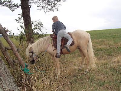 Orawa, Lipnica Wielka, Babia Góra, orawskie szlaki, konie, kucyki, jazda konna, wędrówki konne