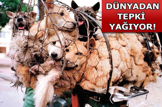 Köpek Yeme Festivali'ne tepki yağıyor