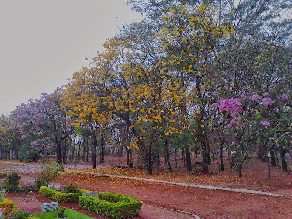 Cemitério da Igualdade durante a Primavera