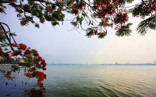 The colour of Hanoi summer