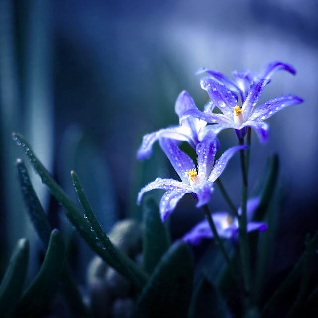 Blue Theme Photography