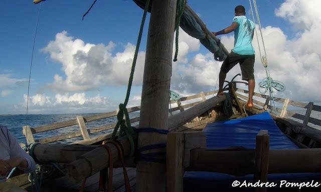 Whale Shark Cruise mafia island