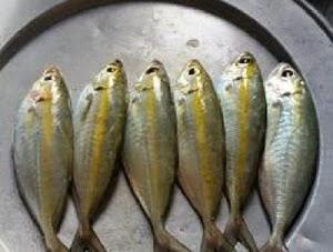 Cá Trác Long Hương  - dacsanthiennhien.net