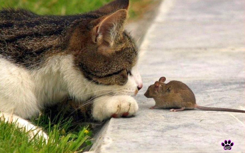 кошки которые ловят мышей