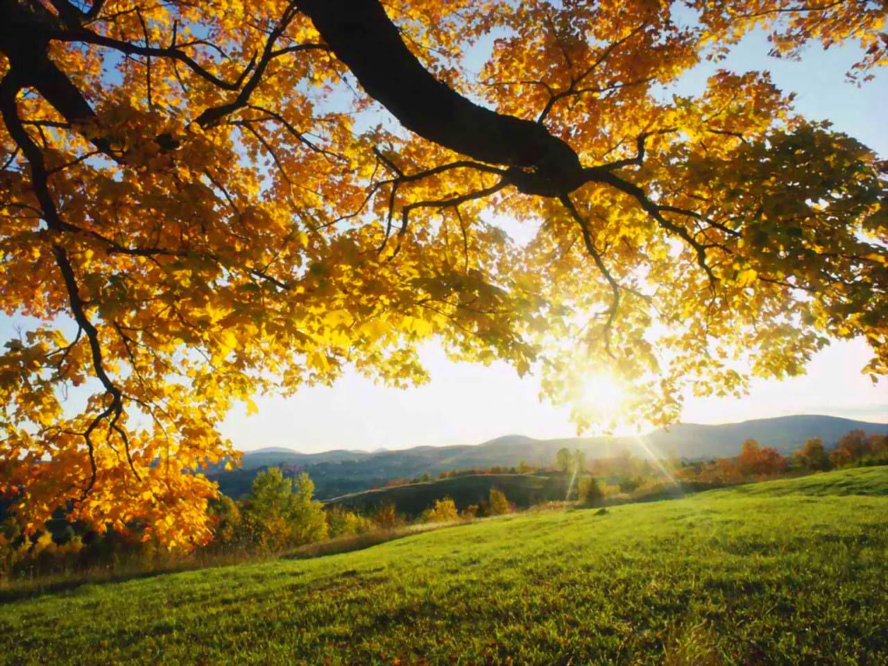 http://2.bp.blogspot.com/-E_-jNbkG3eg/TuS3FRHRTkI/AAAAAAAABm0/lgr7pBLeGQo/s1600/Natural+Pictures+%252811%2529.jpg