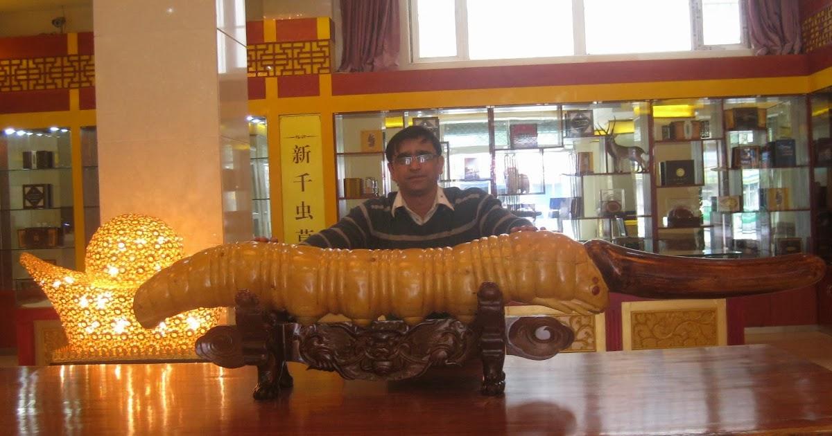 nepal himalayas  cv   shiva devkota