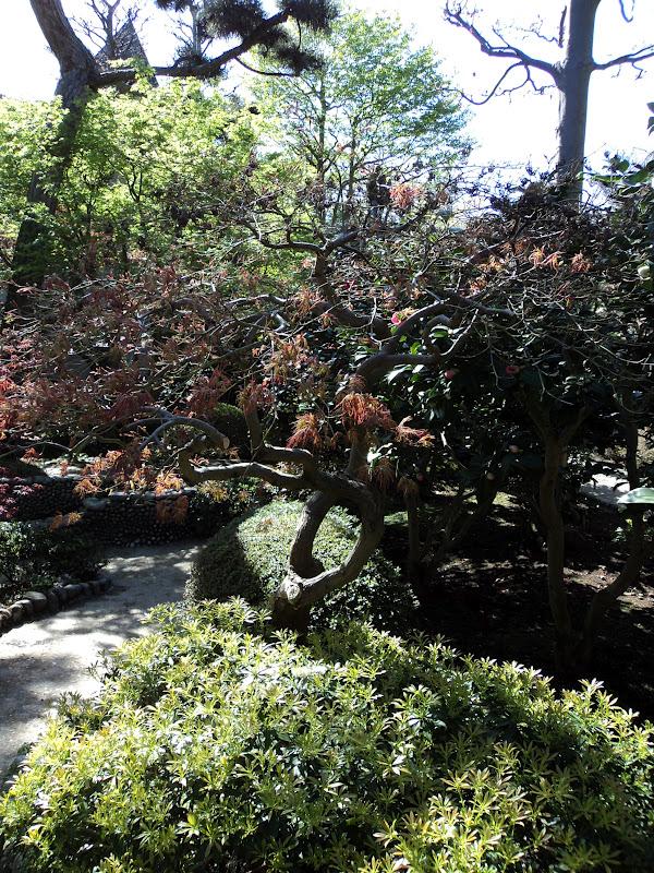 La f erailleuse le jardin japonais du jardin albert kahn for Jardin japonais 78