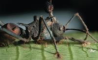 http://2.bp.blogspot.com/-E_Lm9yj1MIE/UiIogPhdyeI/AAAAAAAAG4Q/VeG-0Q19JW0/s1600/Insetos+parasitados+por+fungos+3.jpg