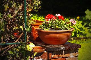 https://pixabay.com/en/garden-flower-nature-gardening-112336/