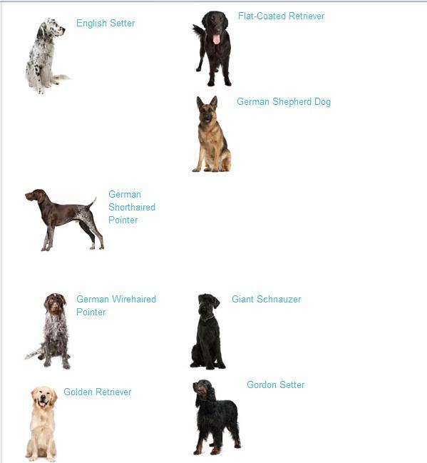 Large Dogs Breeds - Dog Training Home | Dog Types