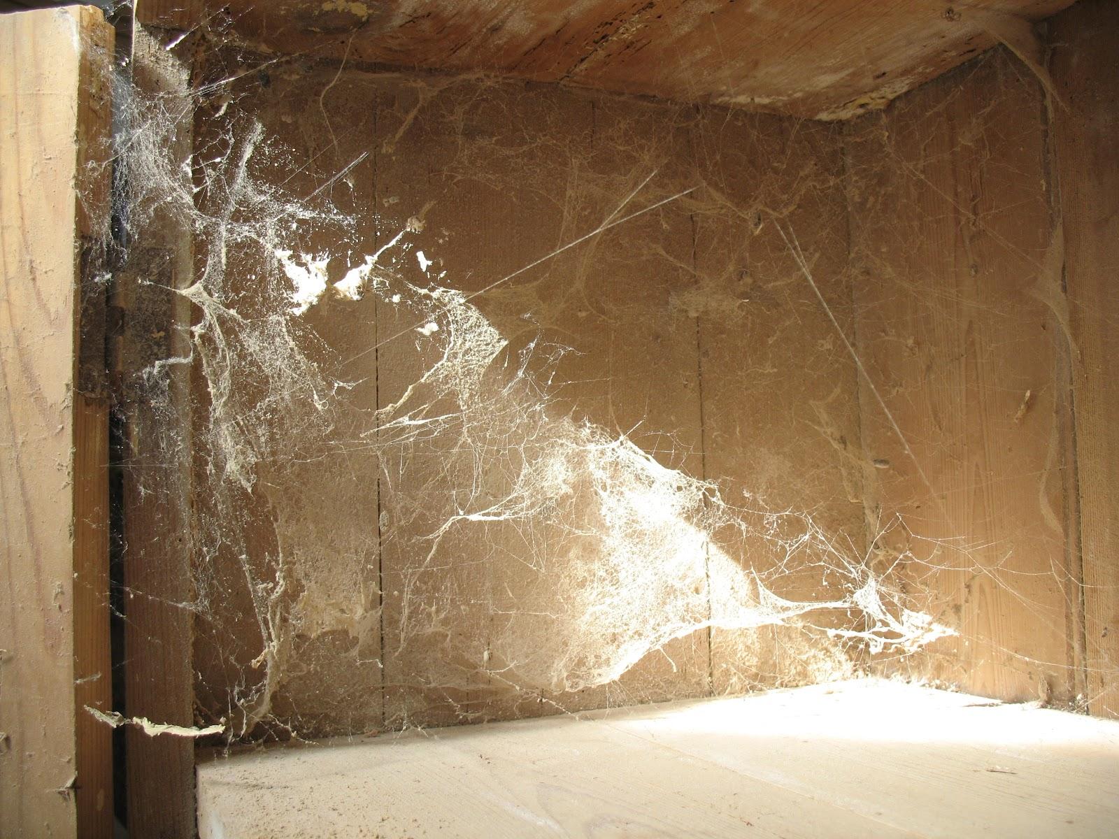 cobweb+1.jpg
