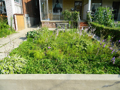 Garden clean up Bloordale before Paul Jung Gardening Services Toronto