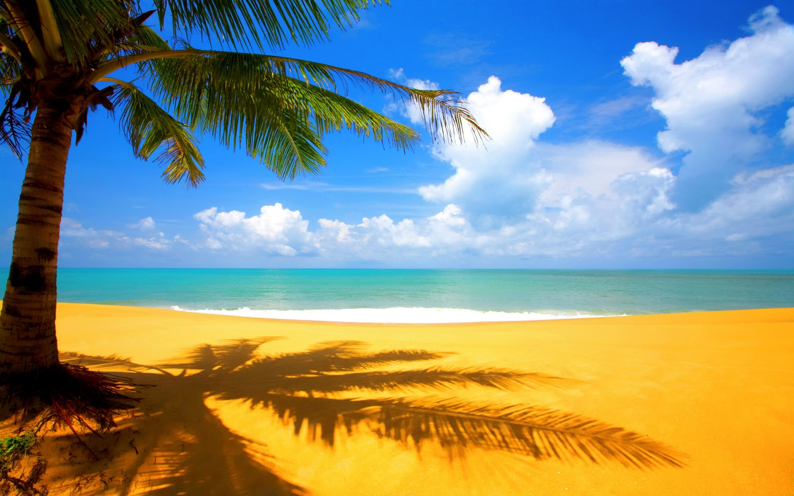 http://2.bp.blogspot.com/-EaBsMcIab4Y/TrAovgA5LgI/AAAAAAAAAkY/To0WuEO7gLc/s1600/tree-beach-side-wallpapers.jpg