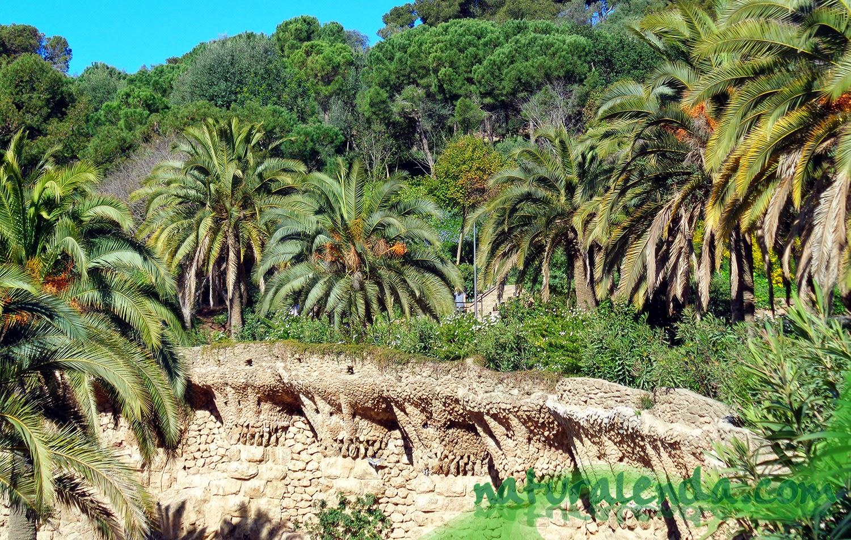 terraza de palmeras