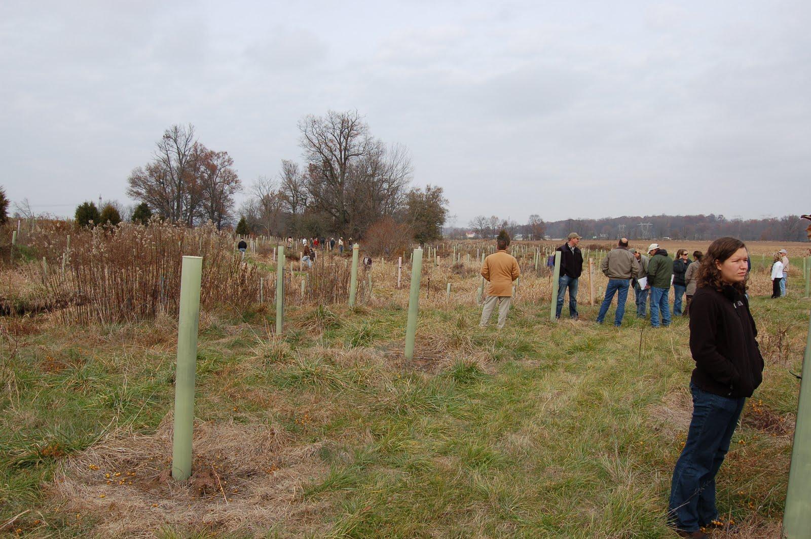 Riparian Buffer Planting Shrubs in Riparian Buffers