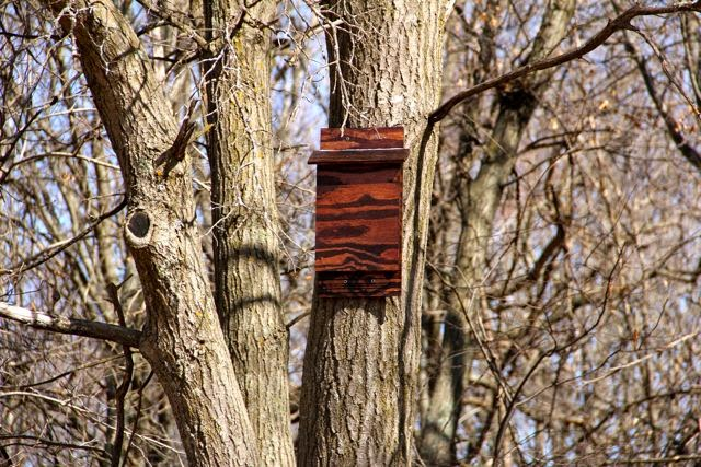 will the bat house be liven in this year?