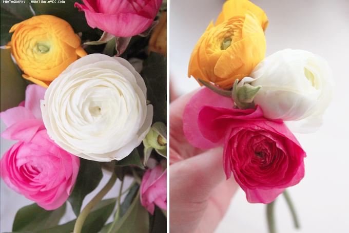 http://2.bp.blogspot.com/-EbKyzbLHLPQ/UVxSTehukDI/AAAAAAAAByI/rf9BzALGe9o/s1600/flowers4.jpg