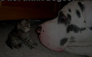 funny cat and dog smile