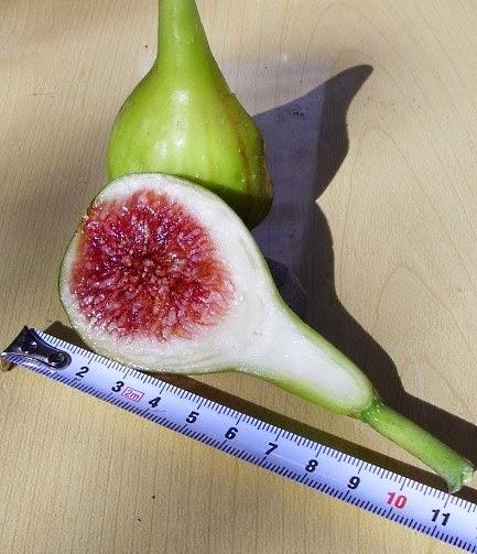 sig figs khan academy