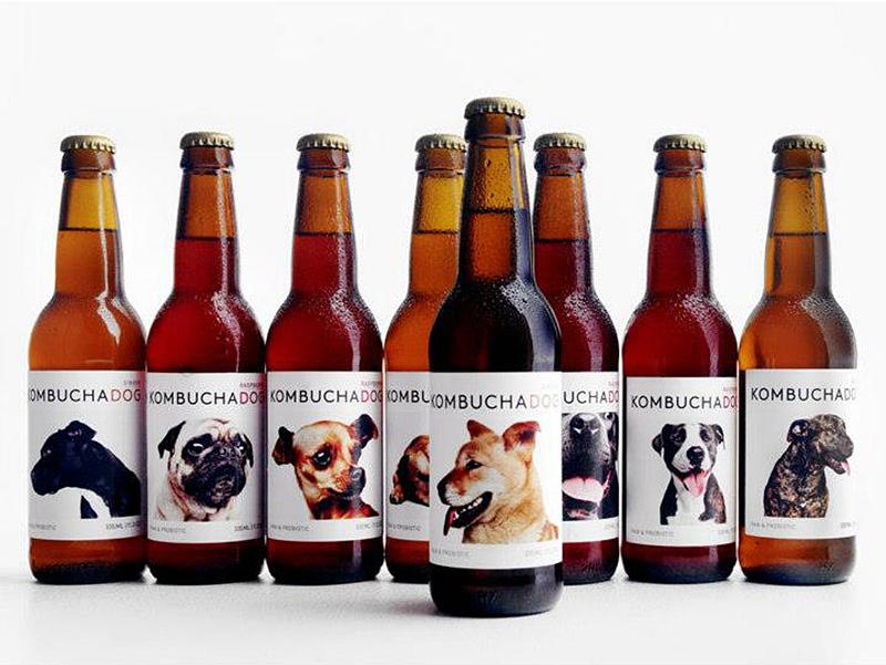 Kombucha Dog Adoption