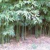 Bambú: Panificados Integrales