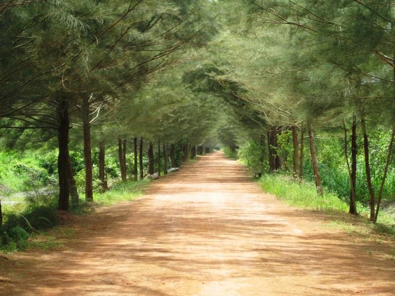 Hasil gambar untuk 1. Bangka Botanical Garden di Bangka
