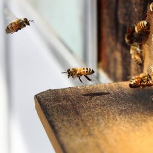 Bee navigating
