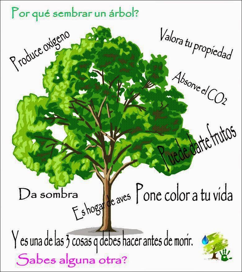 Carpe diem educaci n ambiental los beneficios m s for Porque son importantes los arboles wikipedia