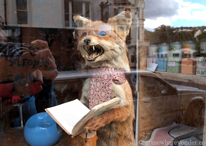 Taxidermy at St-Leonards-on-Sea, England