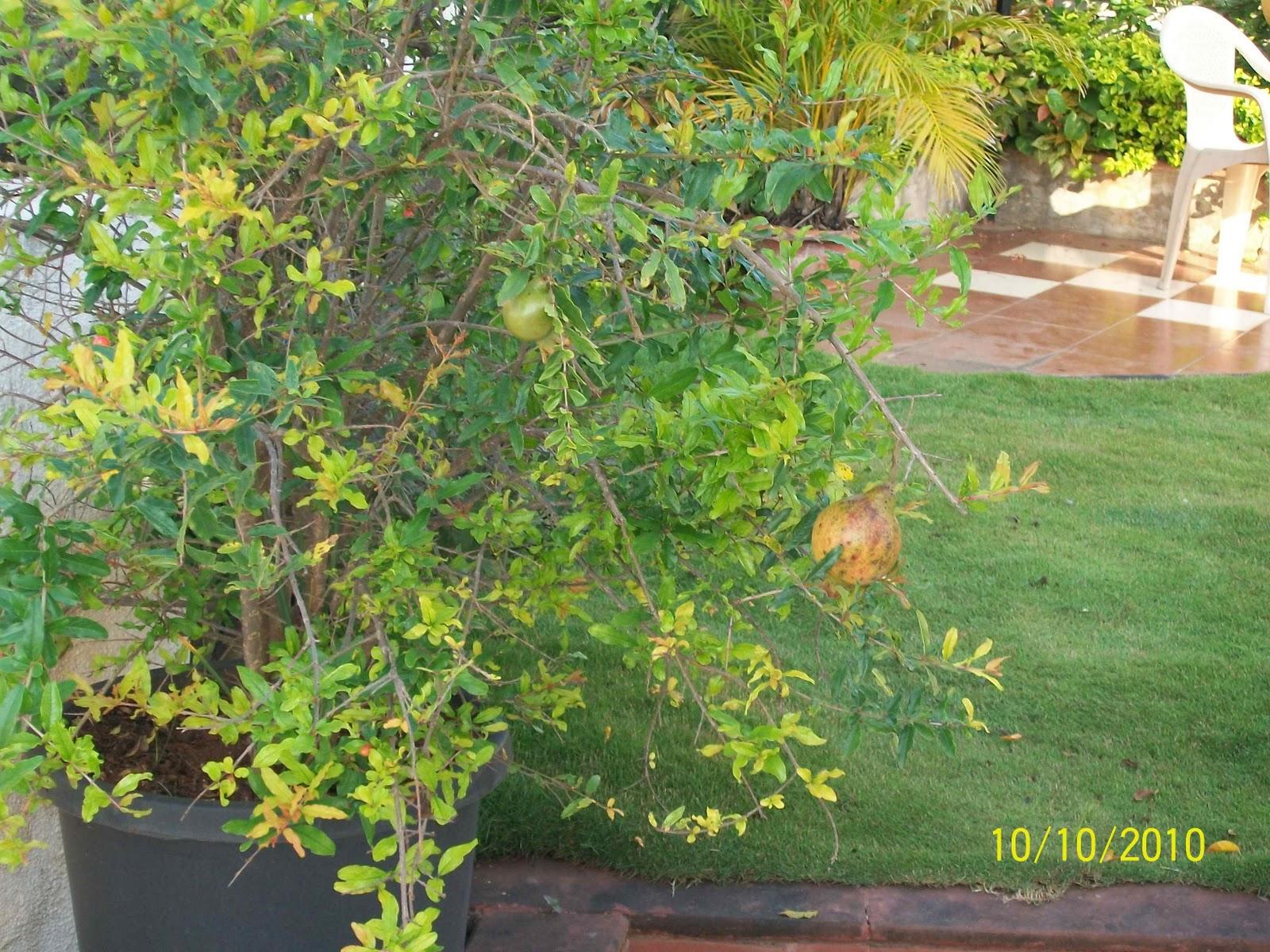 Prakruti mother nature kitchen garden series 002 for Terrace garden plants